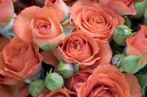 wedding_roses_4