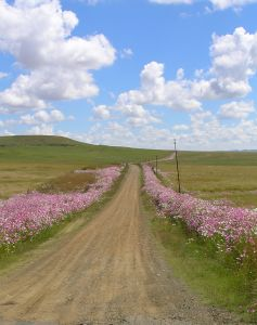 south_african_cross_country_road